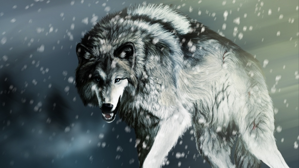 Wounded-wolf-in-the-winter_2560x1440.jpg